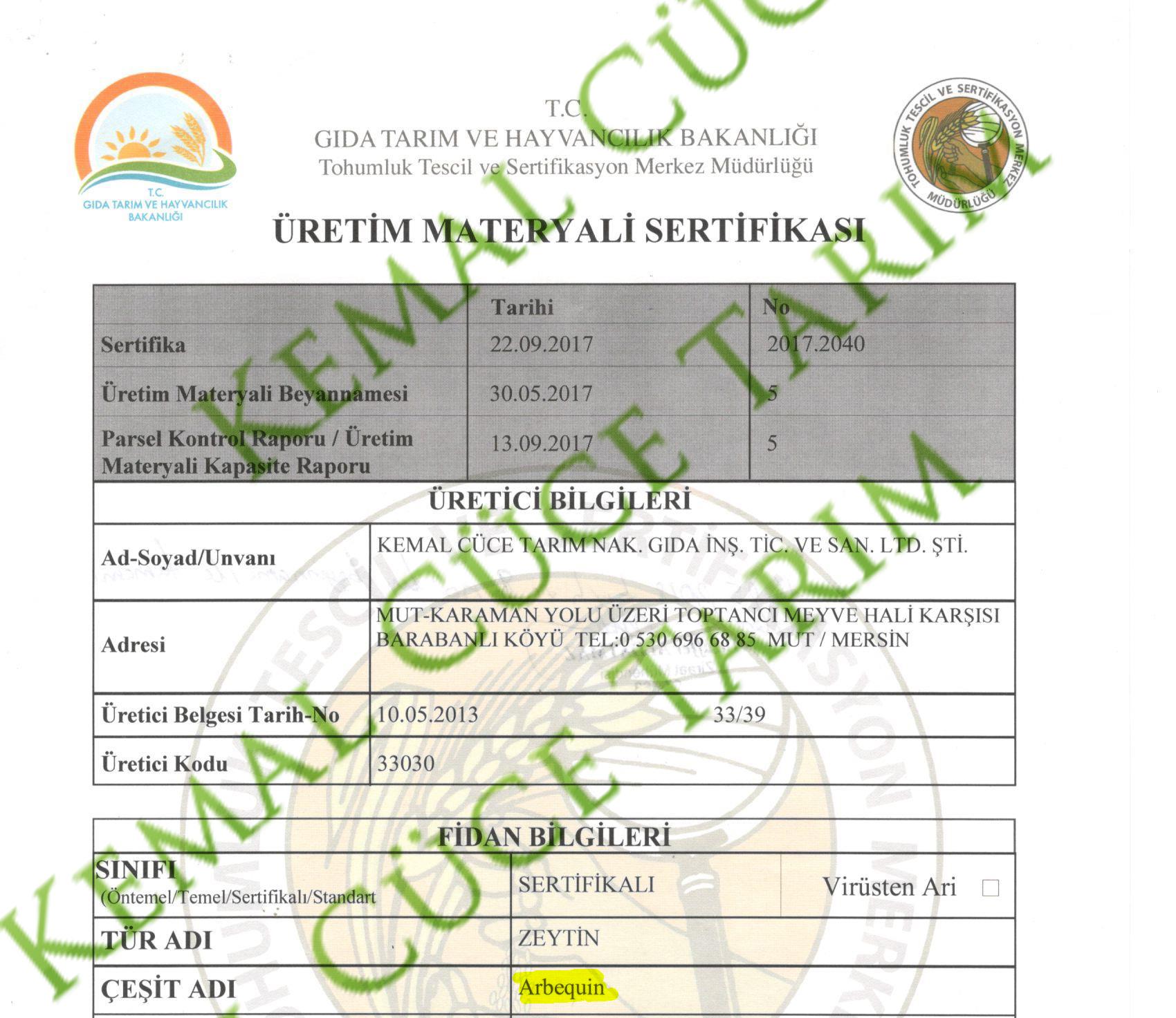 Arbequina zeytin mavi sertifikası